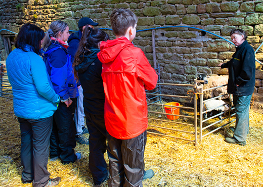 Young people experience life on the farm life on a visit to Keasden Head Farm.