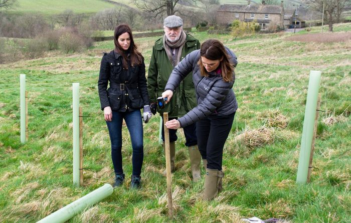 Tree planting in the Yorkshire Dales